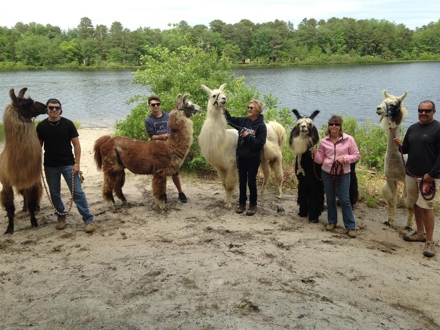 Llama Walk Kossak Degroot